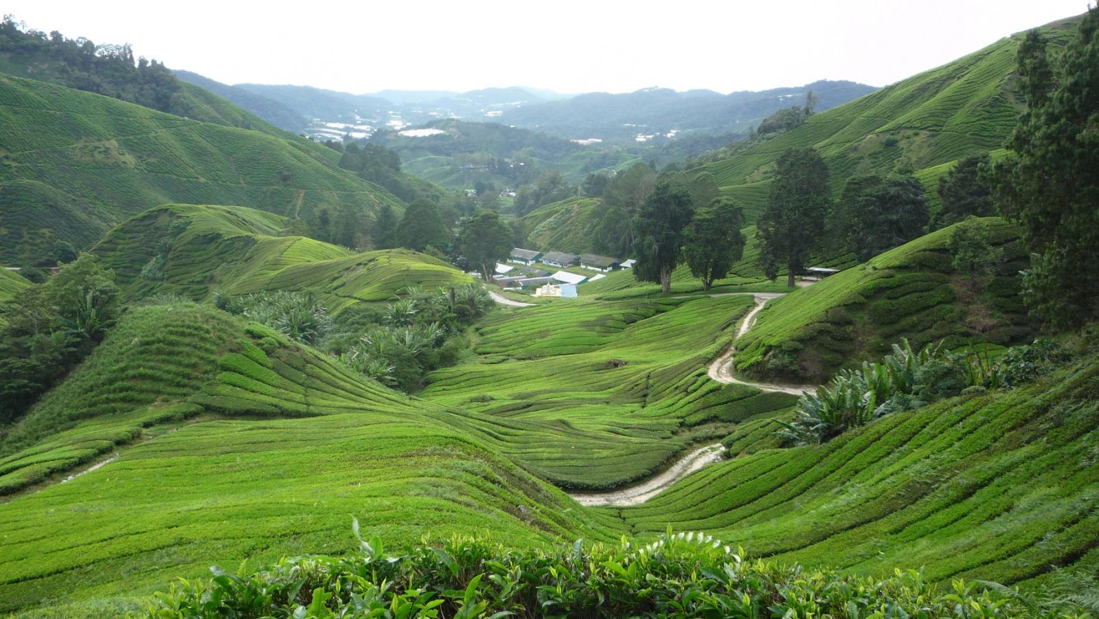 malaysia14-1615302378.jpg