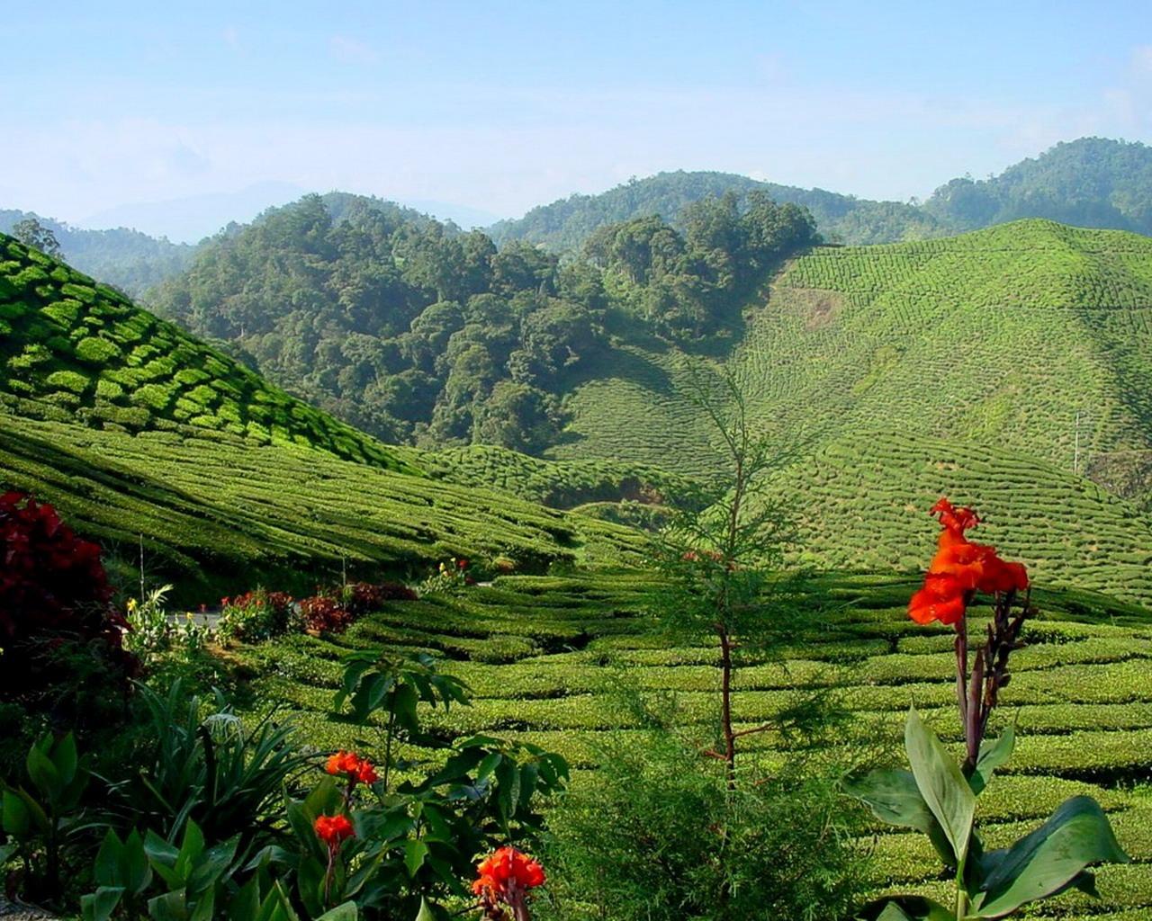 malaysia15-1615302382.jpg