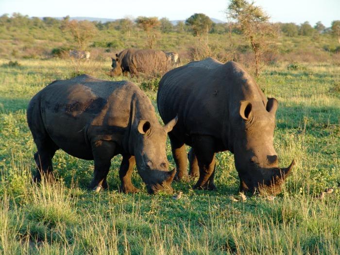 sudafrica10-1622538791.jpg