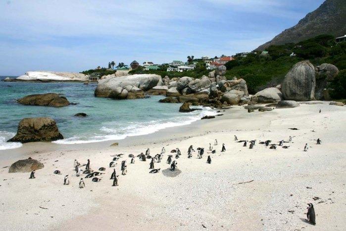 sudafrica18-1622538795.jpg