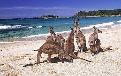 australia13-1600095378.jpg