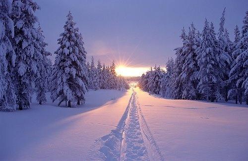 Un inverno nella meravigliosa Lapponia finlandese