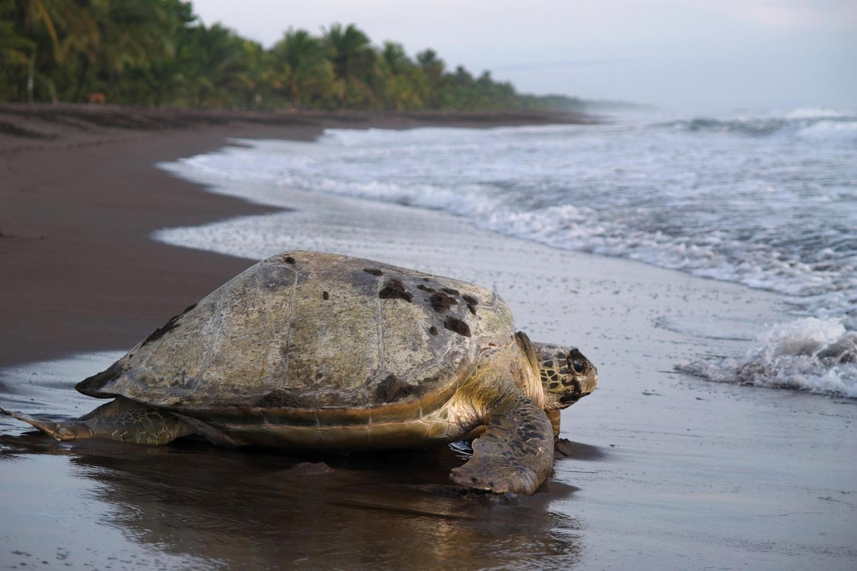 costarica15-1600263155.jpg