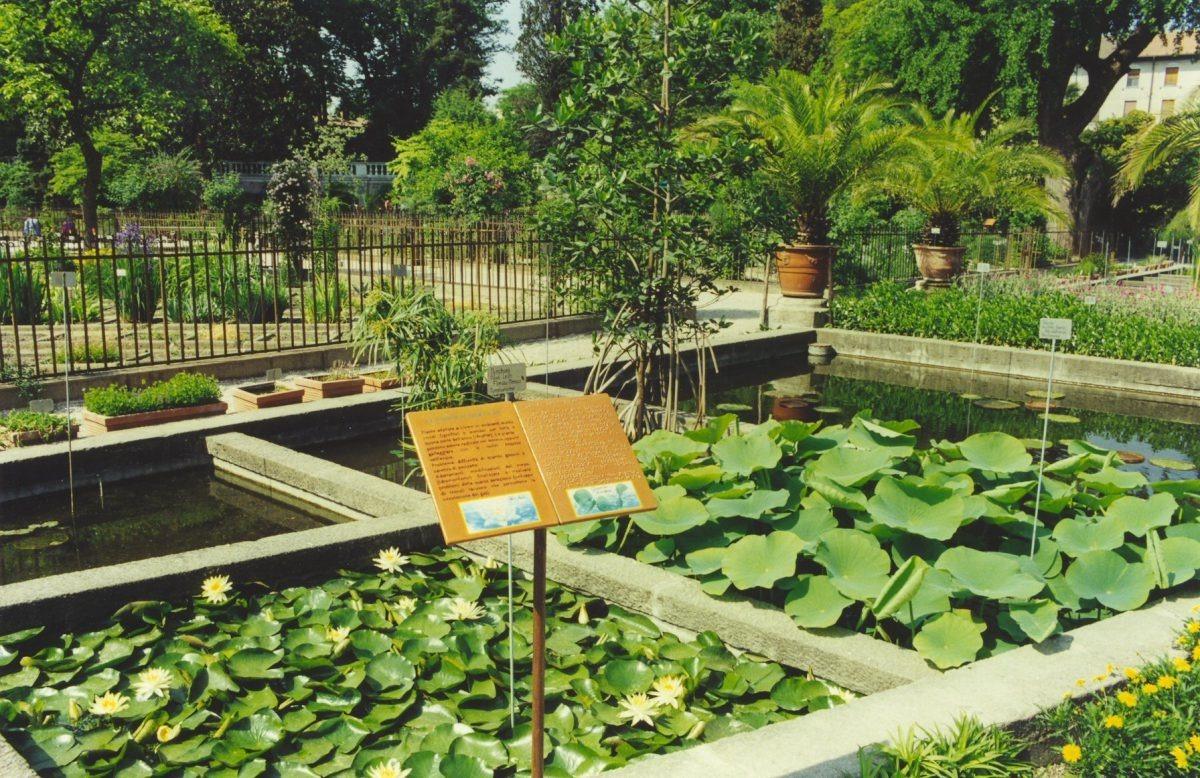 Padova e il suo orto botanico