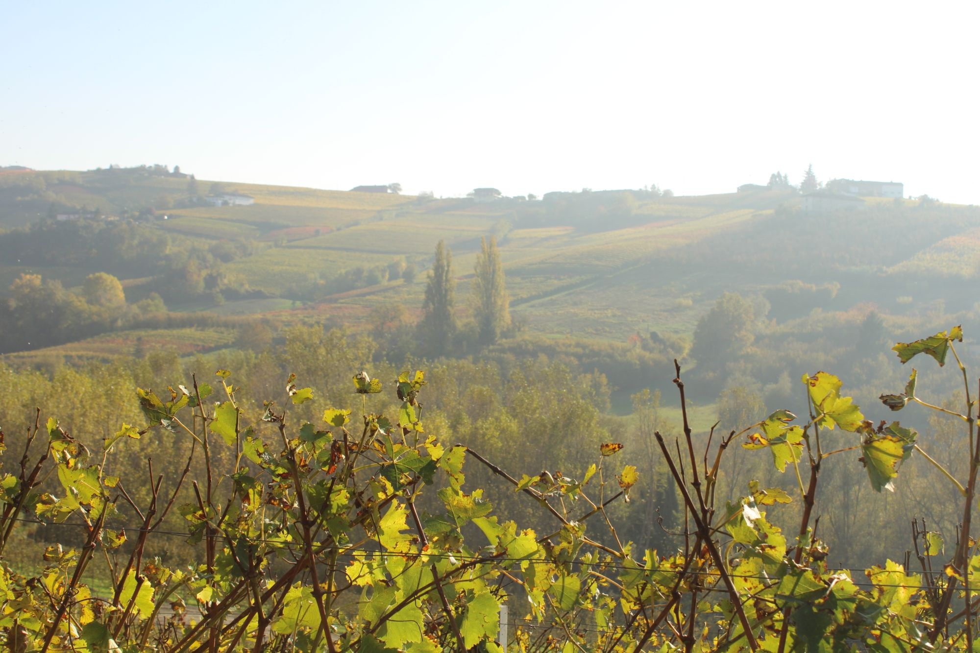 Le Langhe in autunno...